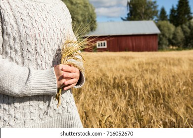 Farmer with branches of wheat in the hands on the background of the field.