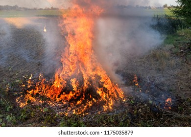 Farmer burns green wastes in bonfire, agriculture concept
