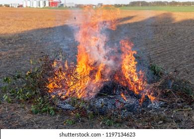 Farmer burns green wastes in bonfire, agriculture and bonfire concept