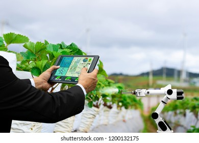 Farmer business holding a tablet smart arm robot work strawberry care agricultural machinery technology
