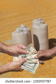 Farmer and buyer hands holding dollar banknote, corn crop in background