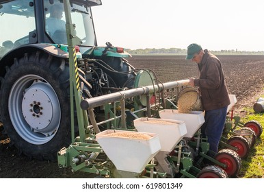 Farmer with can pouring soy seeds for sowing crops at agricultural field in spring