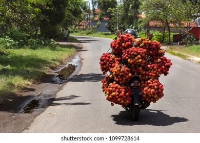 A farmer carries his harvest of rambutan  fruit on the bike. Bali island, Indonesia