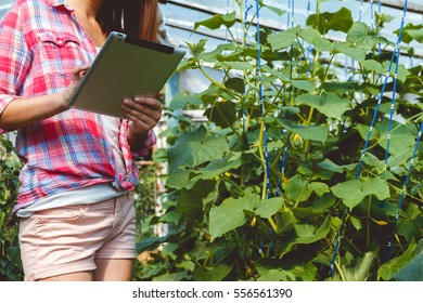 Farmer carries out research in the greenhouse. Modern technology in the cultivation of vegetables concept