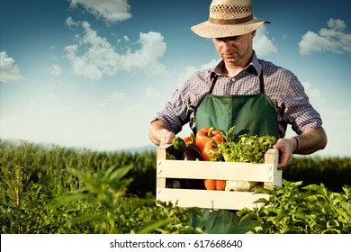 farmer carrying box of picked vegetables