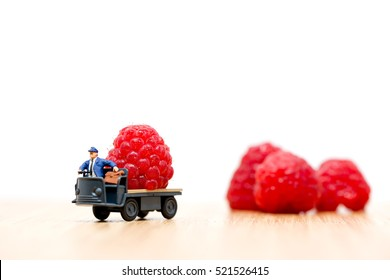 Farmer carrying raspberries.