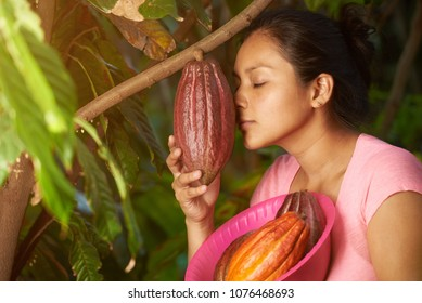 Farmer checking cacao plant. Young woman smell cocoa red pod