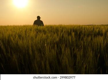 A farmer checking his field at sundown