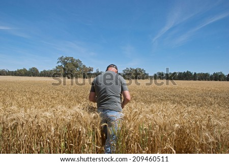 farmer checking how close crop is to harvesting