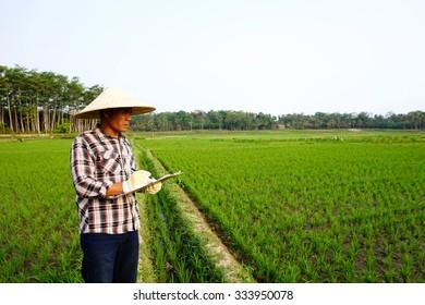 farmer checking on paddy field