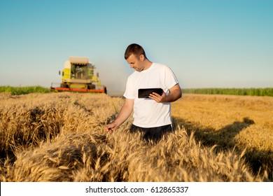 Farmer checking wheat field progress, holding tablet using internet.
