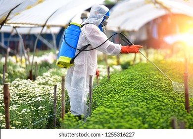 Farmer in Chemical protection suit sprayed fertilizer on the flower farms.