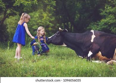 Farmer children feeding cow with green grass. Cow grazing near the farm