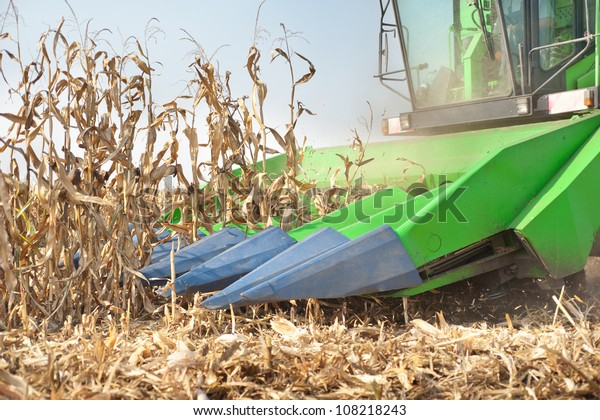 A farmer combines a field of corn