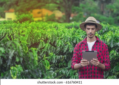 Farmer concerned using digital tablet computer in cultivated coffee field plantation. Modern technology application in agricultural growing activity. Concept Image.