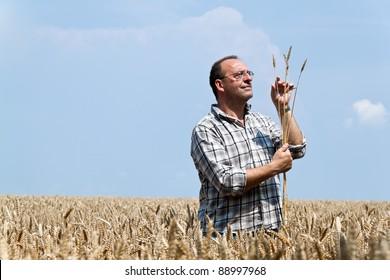 a farmer - farmer in the corn field. checks the harvest