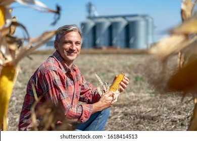 Farmer in Cornfield With Freshly Harvested Corn Cob Against Grain Silo. Farmer and Grain Silos in Cornfield at Harvest Time. Farmer with Corn Cob in his Hands Looking at camera.