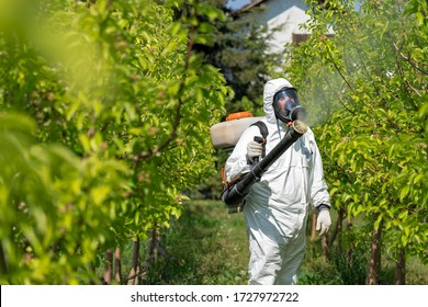 Farmer in Coveralls With Gas Mask Spraying Orchard in Springtime. Farmer Sprays Trees With Toxic Pesticides or Insecticide. Farmer in Protective Equipment Spraying Orchard With Atomizer Sprayer.