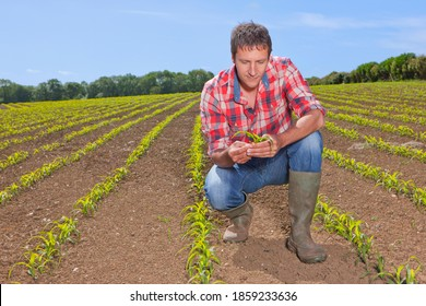 A farmer crouching down in gumboots while examining a corn seedling in the farm field