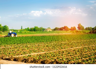 The farmer cultivates the field with a tractor. Agriculture, vegetables, organic agricultural products, agro-industry. farmlands.