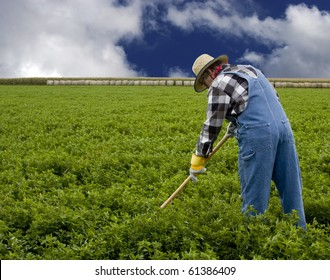 farmer cultivating a field by hand