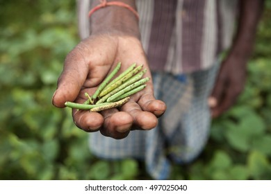 Farmer from Dhanwe Purana presents a handful of beans which he grew in a dry region of Jharkhand, India