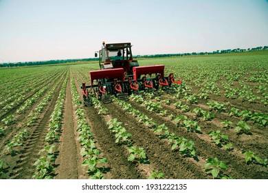 A farmer digging the field with a tractor