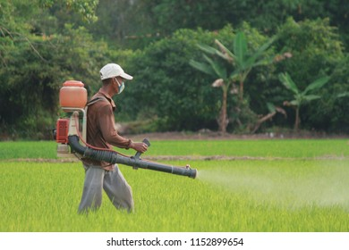A farmer doing a poisoning activities by spraying insecticide or pesticides to control the insects at paddy field. Agriculture and farming industry.