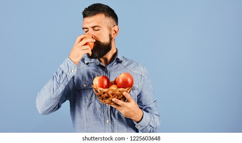 Farmer with dreamy face smells red apple. Farming and autumn crops concept. Man with beard holds wicker bowl with fruit isolated on blue background, defocused. Guy presents homegrown harvest