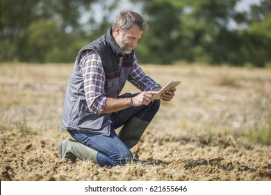farmer examine quality of soil in field and using a digital tablet