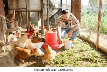 Farmer feeding chikens in a hen house