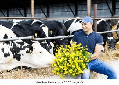 farmer feeds cows with fresh grass