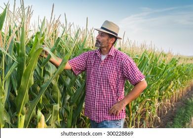 Farmer in a field of corn
