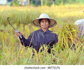farmer in field, it's harvest time