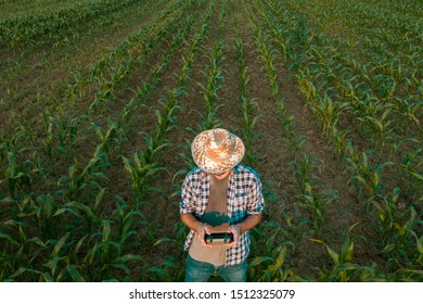 Farmer flying drone in cultivated sorghum field looking over the crops in his sweaty shirt