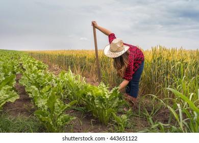 Farmer girl working in the sugar beet field