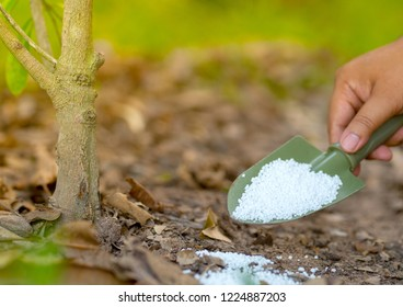Farmer giving nitrogen fertilizer to plant