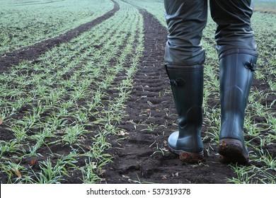 Farmář jde s gumovými botami podél pruhu traktoru přes jeho čerstvě zaseté pole.