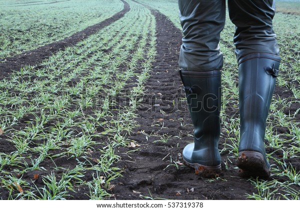Farmer goes with rubber boots along the lane of the tractor over his freshly sown field.