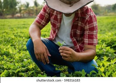 Farmer and the groundnut farm