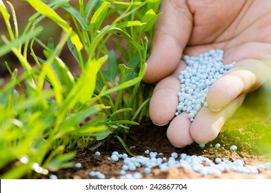 Farmer hand giving chemical fertilizer to young plant