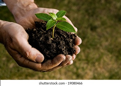 Farmer hand holding a fresh young plant. Symbol of new life and environmental conservation. Space for text