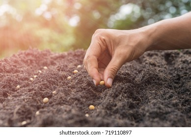 Farmer hand planting a seed in soil (seeds)