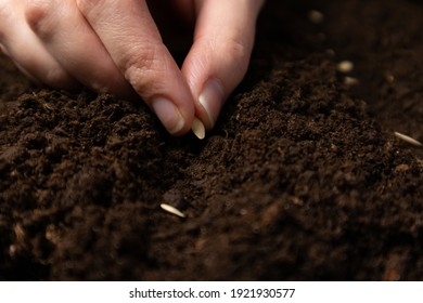 Farmer hand sawing seed on soil close up. Farmer's Hand Planting Seeds, selective focus.