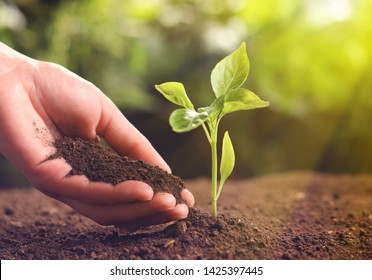 Farmer with handful of soil near young seedling on blurred background, closeup. Space for text