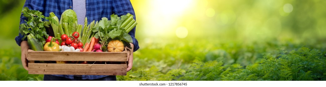 Farmer hands holding wooden box with different vegetables