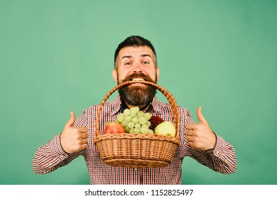 Farmer with happy face presents apples, grapes and cranberries. Farming and gardening concept. Guy with homegrown harvest shows thumbs up. Man with beard holds basket with fruit on green background