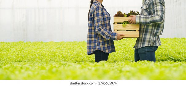 Farmer harvest farm products and fresh vegetables in hydroponic organic farm for food supply chain and delivery to customer hand agriculture concept