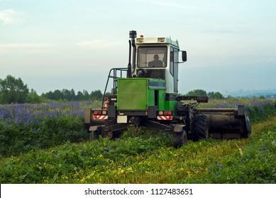 farmer at the harvesting combine mows the field of blooming lucerne on a summer evening