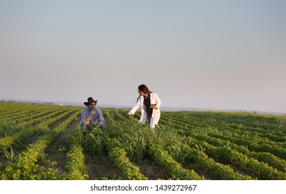 Farmer with hat and agronomist in white coat talking in soybean field full of weeds in summer time